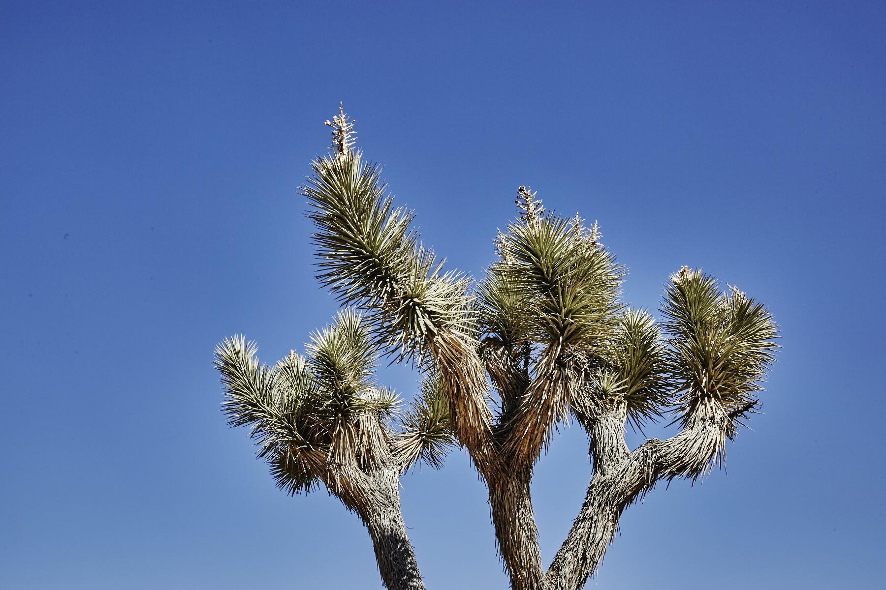 DAY TWO JOSHUA TREE