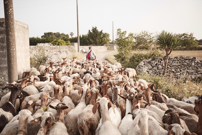 Puglia_0619_0P4A4365
